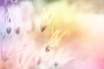 soft background of grass flower in color filters pastel tone