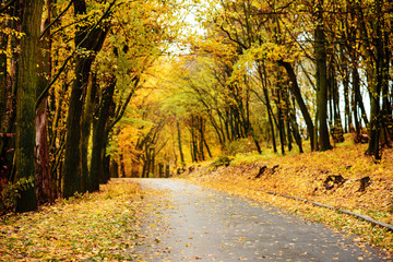 Autumn landscape in the forest with old road
