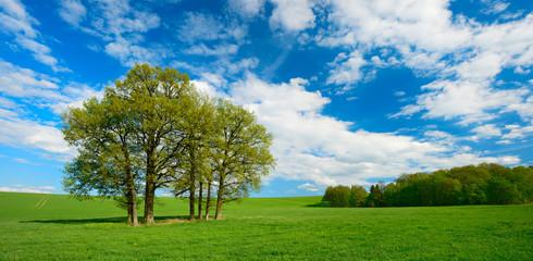 Wall Mural - Landschaft im Frühling, Baumgruppe, grüne Wiese, blauer Himmel mit Wolken