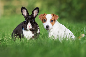 adorable puppy and rabbit posing together on grass