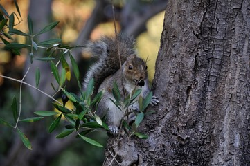 A Squirrel eating lunch