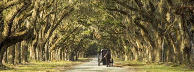Horse drawn carriage on plantation