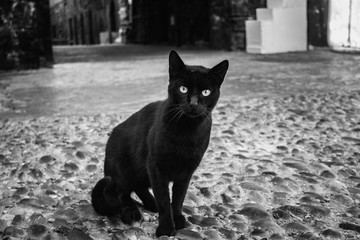 Black Cat street Morocco, Essaouira sity. Cat looking at the camera predatory, glance.
