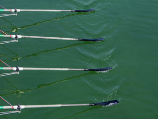 Close up oars of quadruple skulls rowing team race