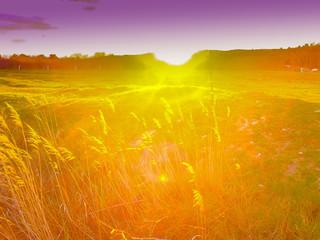 Tuinposter Lavendel Stimmungsvolle Wiese im Sonnenuntergang mit Lensflares und bewegtem Unschärfebereich