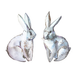 Rabbits. Isolated on white background. Watercolor hand drawn illustration. Easter design.