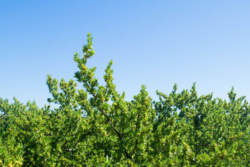 Green bushes and blue sky