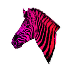 a Zebra head profile vector color drawing, pink and red