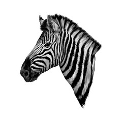 a Zebra head profile vector