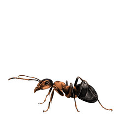 ant sketch vector graphics color picture