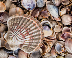 starfish, seashells and stones
