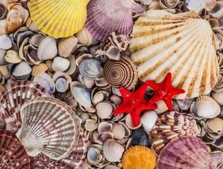 variety of sea shells from beach - panoramic - with large scallop shell.