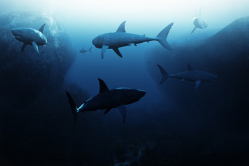 Shark encounter,Large school of sharks patrolling underwater. 3d rendering