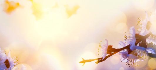 art Spring flower background; Tree blosssom