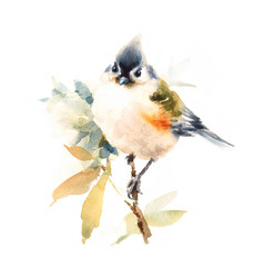 Watercolor Bird Titmouse on the Branch With Leaves Hand Painted Illustration isolated on white background
