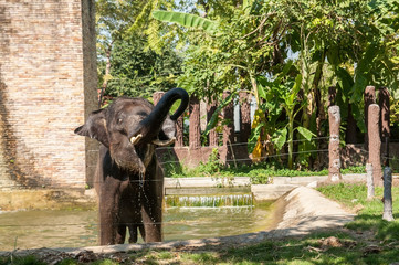 Thailand elephant camp in public zoo.