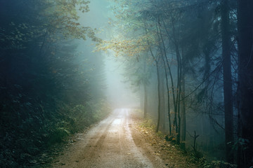 Wall Mural - Magic autumn color foggy forest road. Scary dark blue green colored countryside woodland.