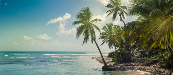 Fotomurales - Beach with coconut palm,  uninhabited tropical island