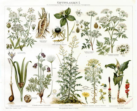 Poisonous plants I (from Meyers Lexikon, 1895, 7/568/569)