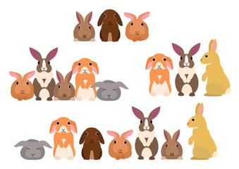 Group of rabbits