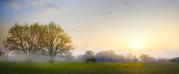 Wall Mural - art Spring countryside landscape; morning farmland field and blooming tree