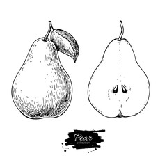 Pear vector drawing. Isolated hand drawn full pear and sliced pi