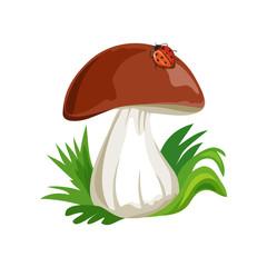 mushroom cartoon with ladybug isolated