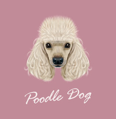 Vector illustrated Portrait of Poodle dog