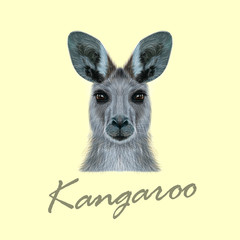 Vector Illustrated portrait of Kangaroo