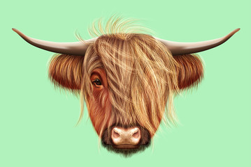 Illustrated portrait of Highland cattle