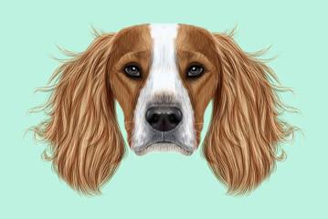 Illustrated Portrait of English Springer Spaniel dog