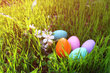 easter colorful eggs on the green grass