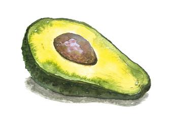 Avocado. Watercolor illustration