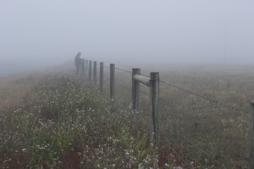Barbed wire fence in mist