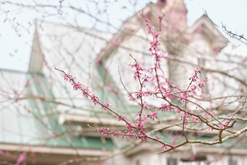 Pink blossom branch with house behind