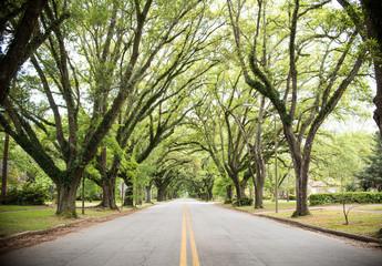 Magnolia Forest