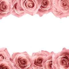 Fresh soft pink rose frame on white background. Wedding background.