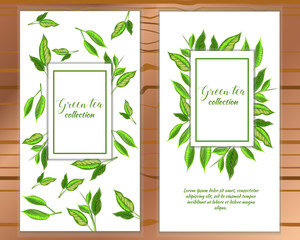 Vector vertical green tea banner with tea leaves on white backgroud. Design for packaging, tea shop, drink menu, homeopathy and health care products.