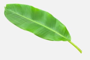 Banana leaf isolated over white