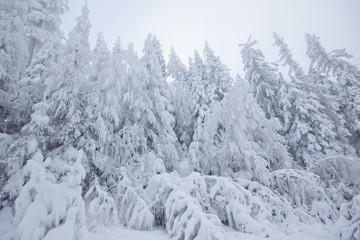Nebelstimmung im Winter