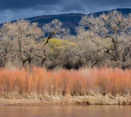Rio Grande, willows, cottonwood trees and Sandia Mountains in central New Mexico