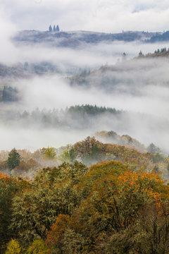 rolling misty hills in willamette valley