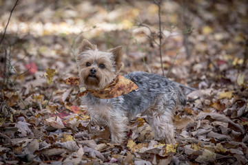 dog dressed up in the fall