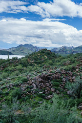 Diverse Bush Highway Arizona USA