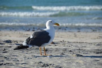 The seagull on the beach