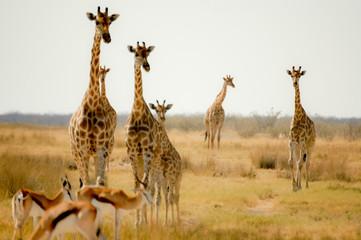 National park of Etosha