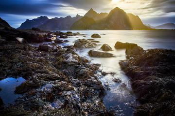 sunset over the mountain at Moskenes, Lofoten Island - Norway with stranded  seaweed on the rocks