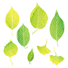 green leaves illustrations by watercolor paint