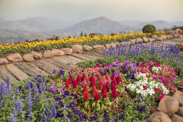 Garden with footpath through flowerbeds
