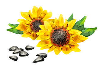Sunflower seeds, watercolor